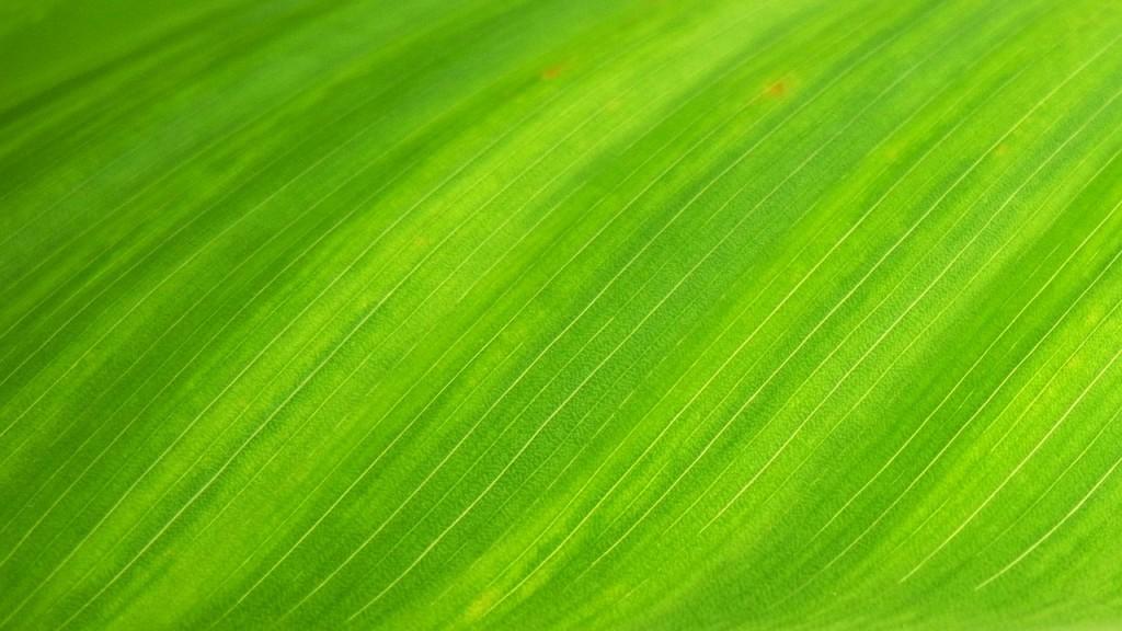 green-leaf-176722_1280
